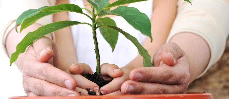 Planting a plant-507361-edited.jpeg